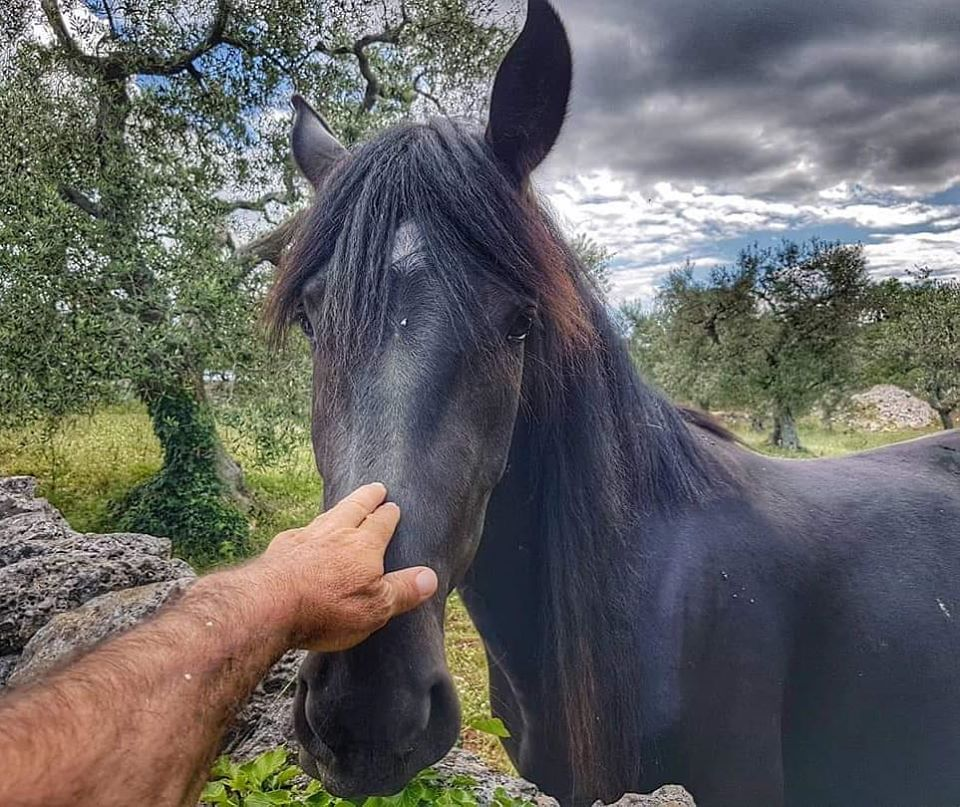 Puglia? Puglia! (Foto di Donato Pinto)